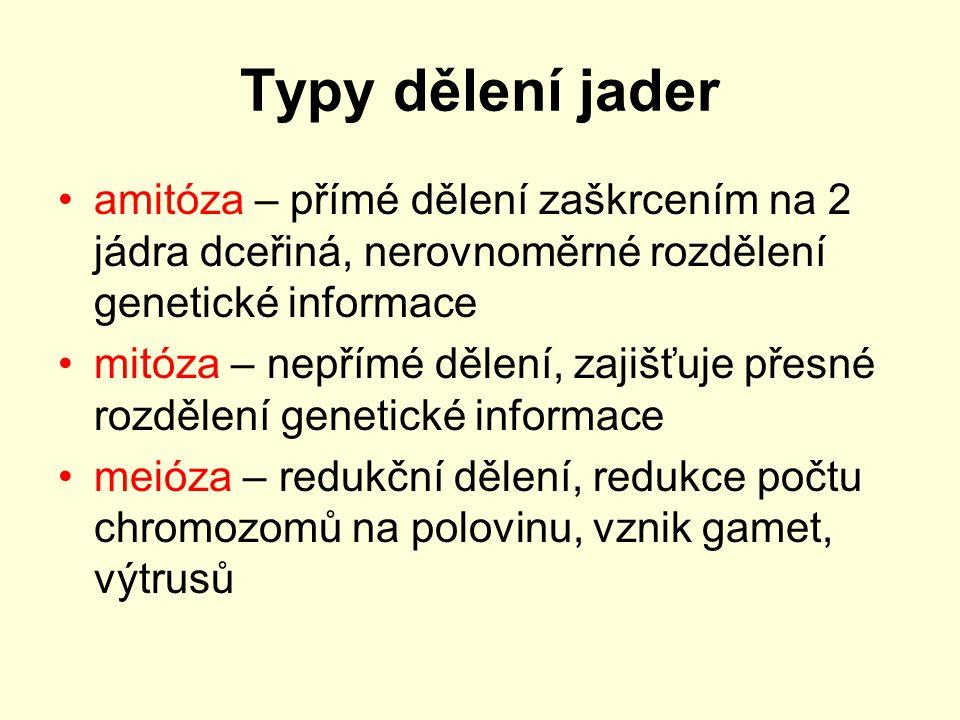 Typy dělení jader amitóza – přímé dělení zaškrcením na 2 jádra dceřiná, nerovnoměrné rozdělení genetické informace mitóza – nepřímé dělení, zajišťuje