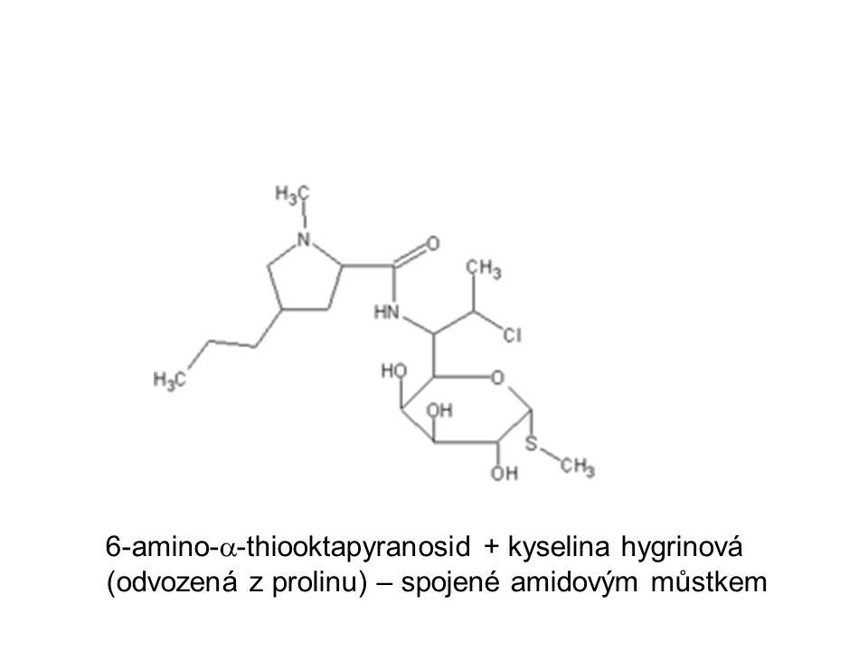6-amino-  -thiooktapyranosid + kyselina hygrinová (odvozená z prolinu) – spojené amidovým můstkem