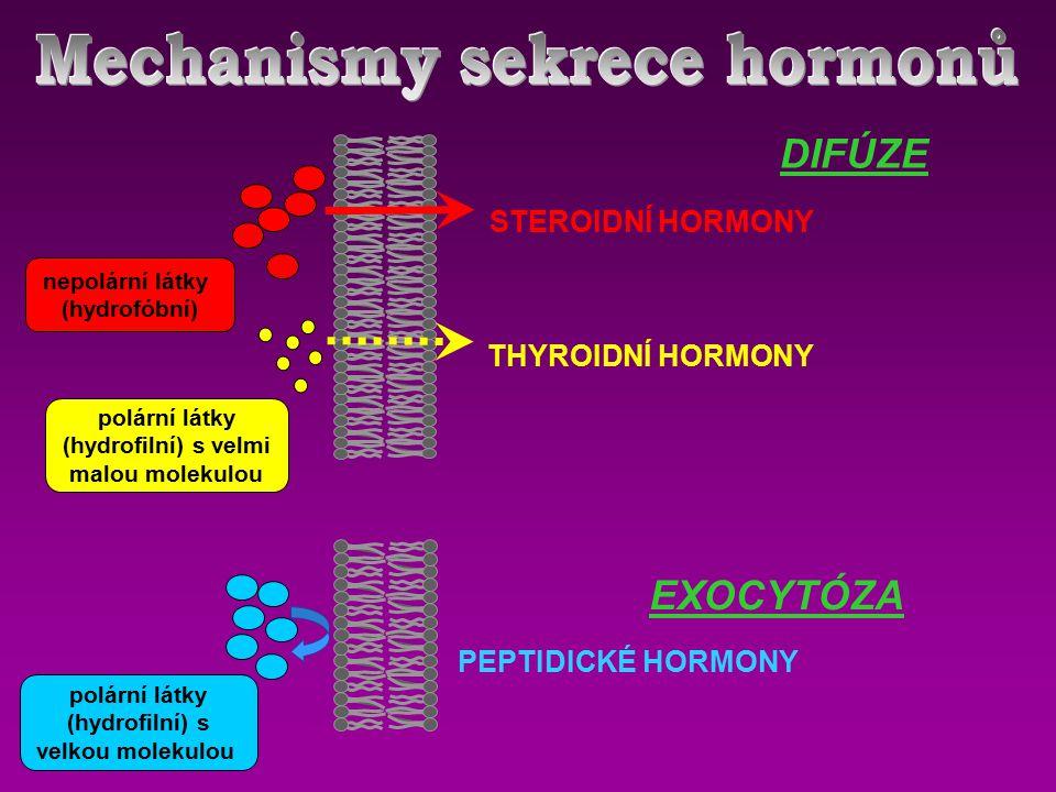 polární látky (hydrofilní) s velkou molekulou nepolární látky (hydrofóbní) polární látky (hydrofilní) s velmi malou molekulou PEPTIDICKÉ HORMONY STEROIDNÍ HORMONY THYROIDNÍ HORMONY DIFÚZE EXOCYTÓZA