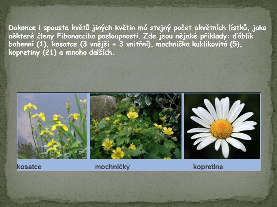 Dokonce i spousta květů jiných květin má stejný počet okvětních lístků, jako některé členy Fibonacciho posloupnosti. Zde jsou nějaké příklady: ďáblík