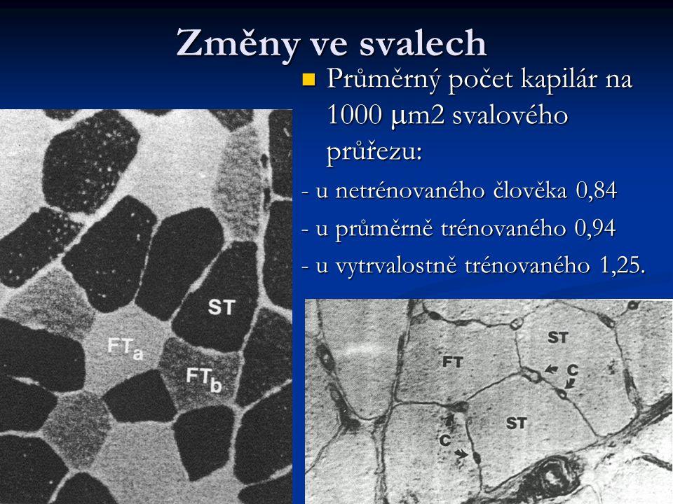 Změny ve svalech Průměrný počet kapilár na 1000  m2 svalového průřezu: Průměrný počet kapilár na 1000  m2 svalového průřezu: - u netrénovaného člově