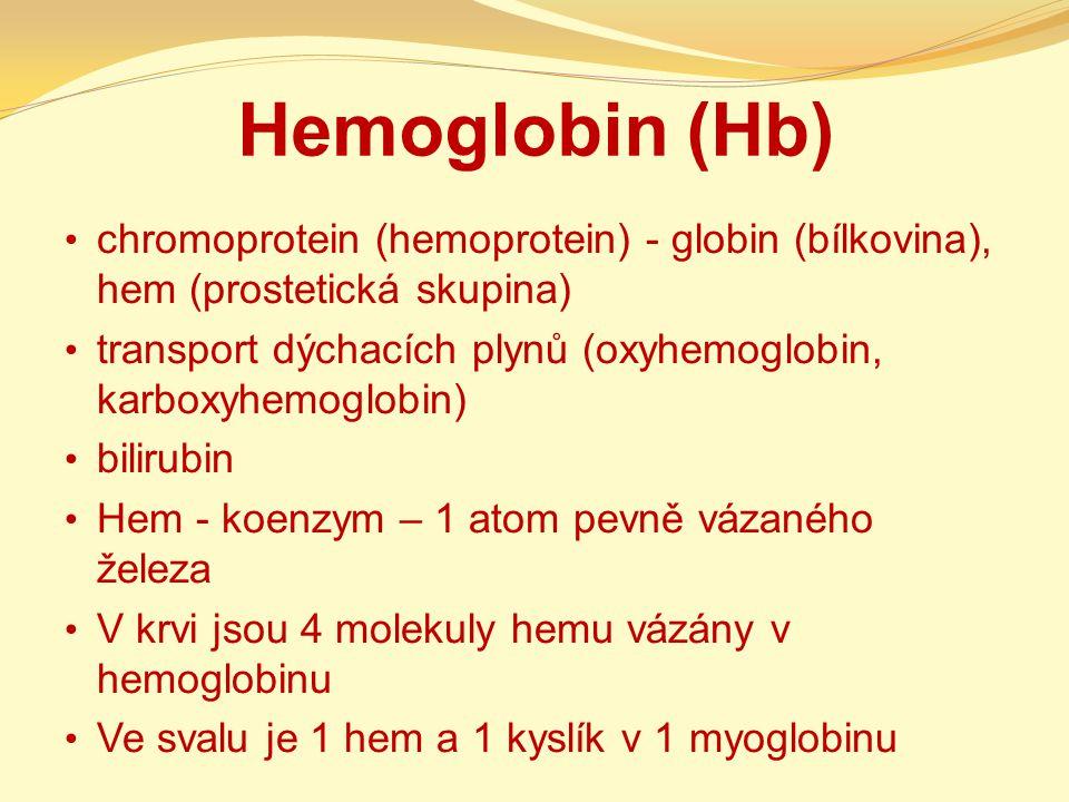 Hemoglobin (Hb) chromoprotein (hemoprotein) - globin (bílkovina), hem (prostetická skupina) transport dýchacích plynů (oxyhemoglobin, karboxyhemoglobi