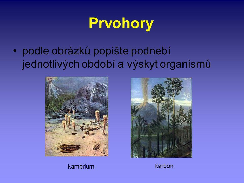 Prvohory podle obrázků popište podnebí jednotlivých období a výskyt organismů kambrium karbon