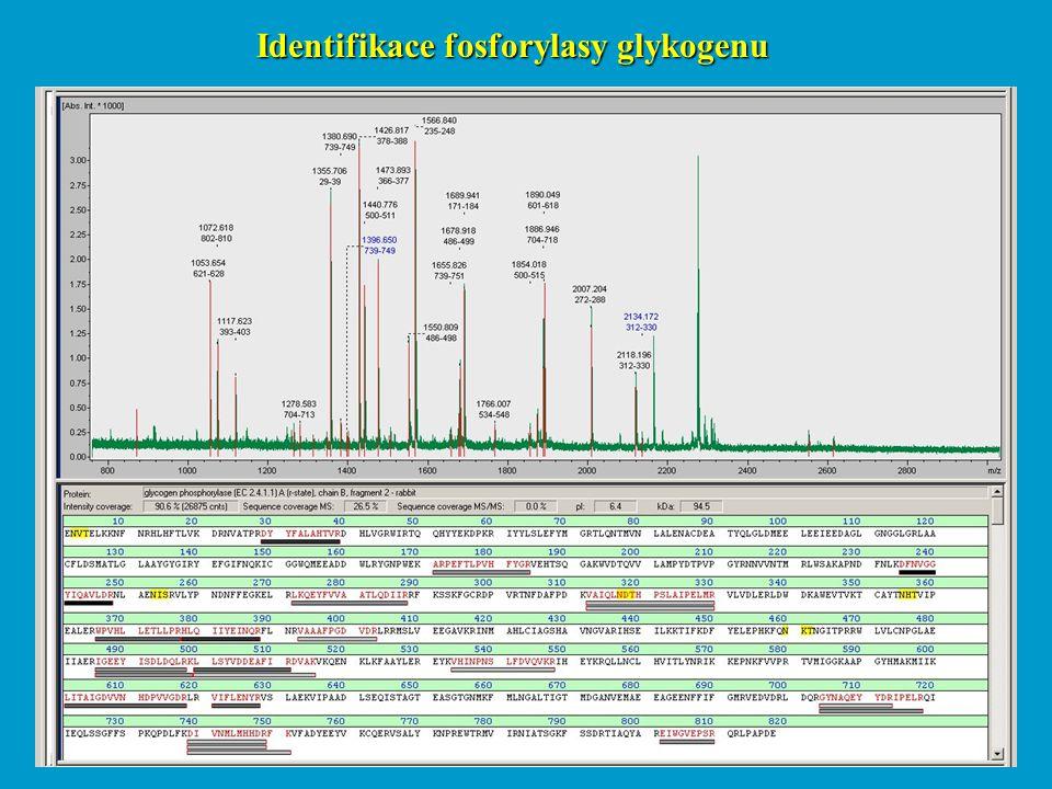 Identifikace fosforylasy glykogenu