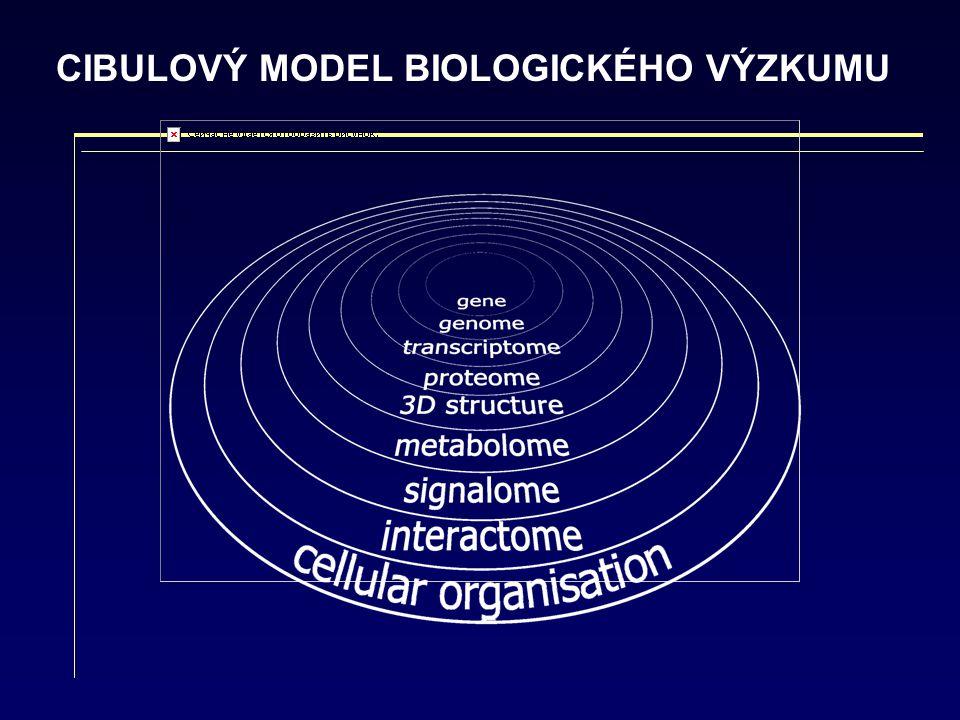CIBULOVÝ MODEL BIOLOGICKÉHO VÝZKUMU