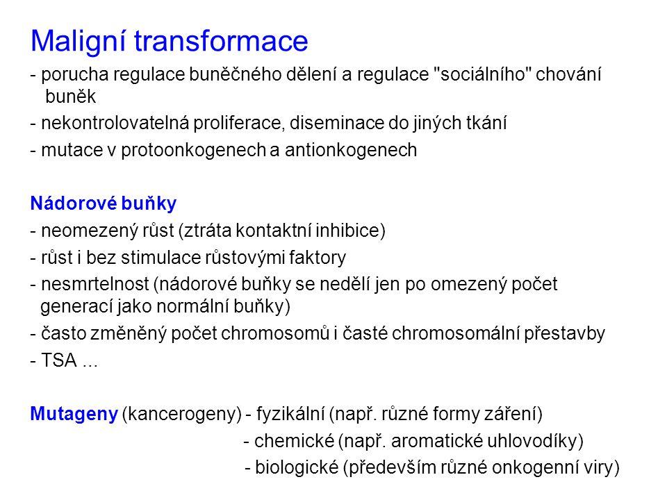 Maligní transformace - porucha regulace buněčného dělení a regulace