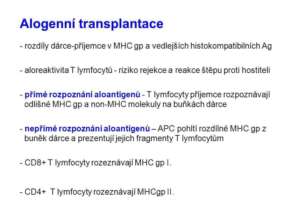 Alogenní transplantace - rozdíly dárce-příjemce v MHC gp a vedlejších histokompatibilních Ag - aloreaktivita T lymfocytů - riziko rejekce a reakce ště