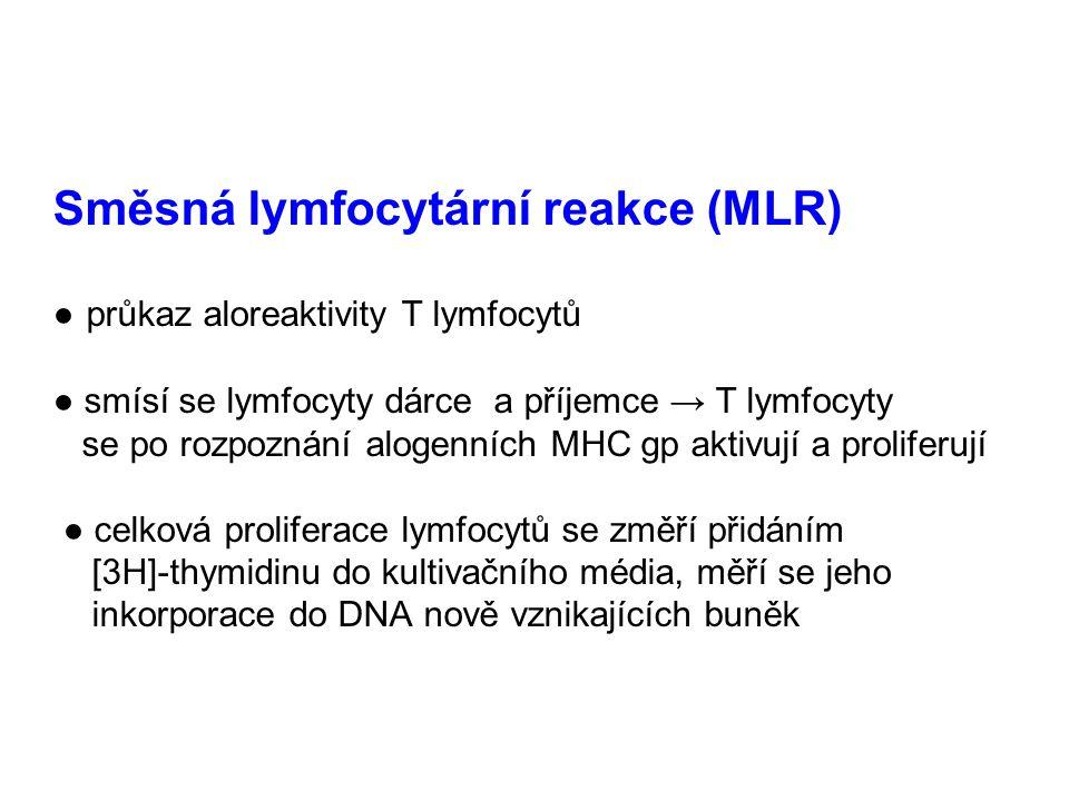 Směsná lymfocytární reakce (MLR) ● průkaz aloreaktivity T lymfocytů ● smísí se lymfocyty dárce a příjemce → T lymfocyty se po rozpoznání alogenních MH