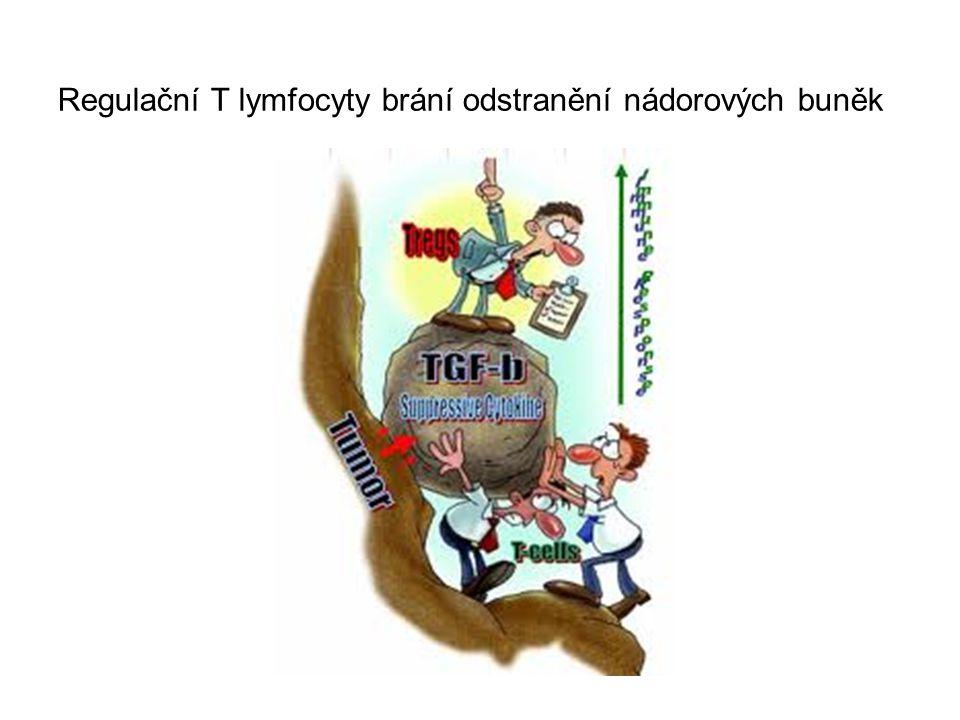 4) nádorové vakcíny - in vitro stimulace T H 1 a T C buněk nádorovými antigeny 5) imunoterapie dendritickými buňkami - in vitro kultivace monocytů ve vhodném cytokinovém prostředí (GM-CSF, IL-4) → přeměna v dendritické buňky - kultivace dendritických buněk s nádorovými antigeny 6) imunoterapie T lymfocyty dárce - po alogenní transplantaci kostní dřeně - vyvolávají reakci GvL 7) imunoterapie produkty imunitního systému - IL-2 – karcinomy ledvin - IFN  - hematoonkologie