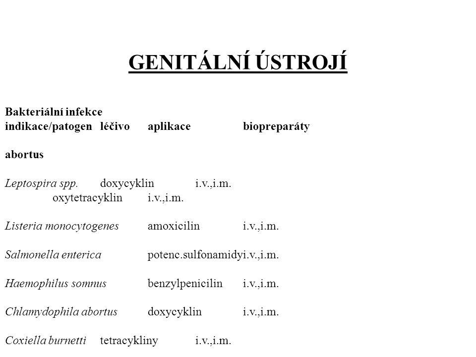 GENITÁLNÍ ÚSTROJÍ Bakteriální infekce indikace/patogen léčivo aplikacebiopreparáty abortus Leptospira spp.doxycyklini.v.,i.m.