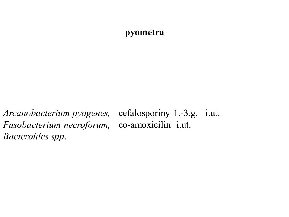 pyometra Arcanobacterium pyogenes,cefalosporiny 1.-3.g.i.ut.