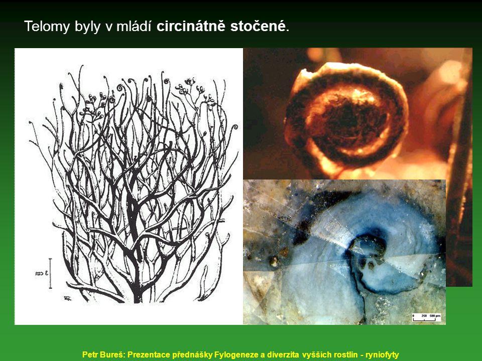 Telomy byly v mládí circinátně stočené. Petr Bureš: Prezentace přednášky Fylogeneze a diverzita vyšších rostlin - ryniofyty