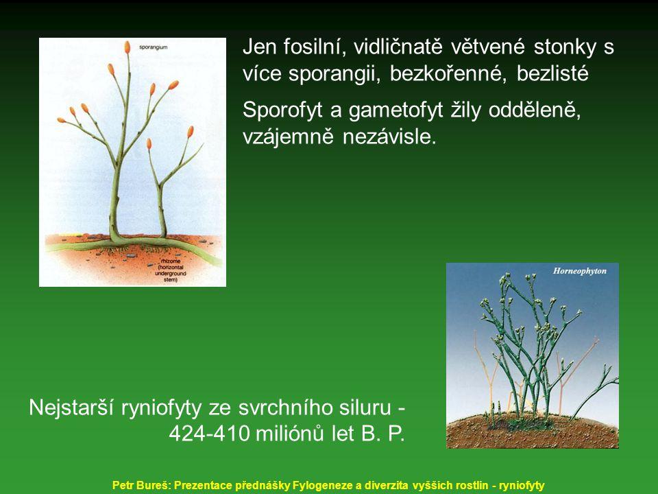 Jen fosilní, vidličnatě větvené stonky s více sporangii, bezkořenné, bezlisté Sporofyt a gametofyt žily odděleně, vzájemně nezávisle. Nejstarší ryniof