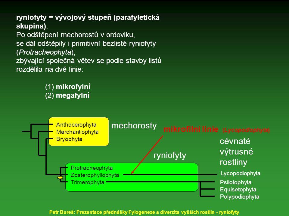Trimerophyta Protracheophyta Bryophyta Lycopodiophyta Psilotophyta Equisetophyta Polypodiophyta mechorosty ryniofyty cévnaté výtrusné rostliny Zosterophyllophyta Marchantiophyta Anthocerophyta mikrofilní linie (Lycopodiophytina) megafilní linie (Euphyllophytina) Petr Bureš: Prezentace přednášky Fylogeneze a diverzita vyšších rostlin - ryniofyty ryniofyty = vývojový stupeň (parafyletická skupina).