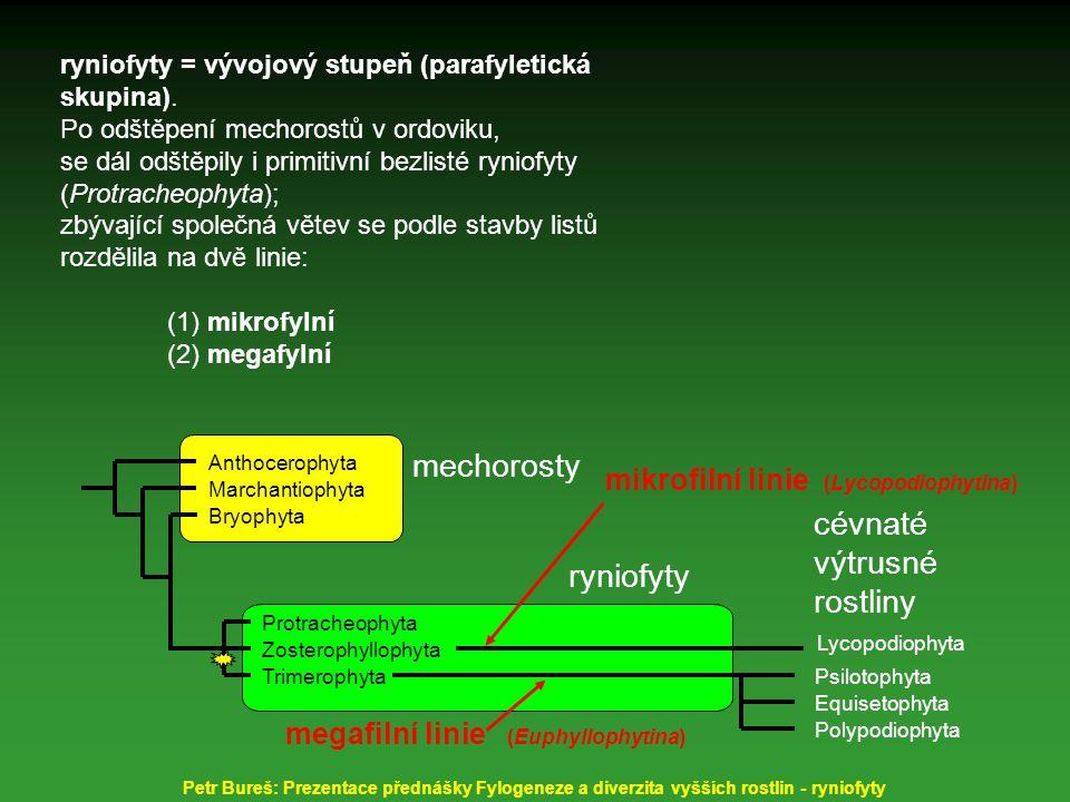 Trimerophyta Protracheophyta Bryophyta Lycopodiophyta Psilotophyta Equisetophyta Polypodiophyta mechorosty ryniofyty cévnaté výtrusné rostliny Zosterophyllophyta Marchantiophyta Anthocerophyta mikrofilní linie (Lycopodiophyta) megafilní linie (Euphyllophyta) megafylní linie má 30 kb inverzi v chloroplastovém genomu liší se od plavuní a mechorostů (v části obsahující gen pro RNA polymerázu) Petr Bureš: Prezentace přednášky Fylogeneze a diverzita vyšších rostlin - ryniofyty ryniofyty = vývojový stupeň (parafyletická skupina).