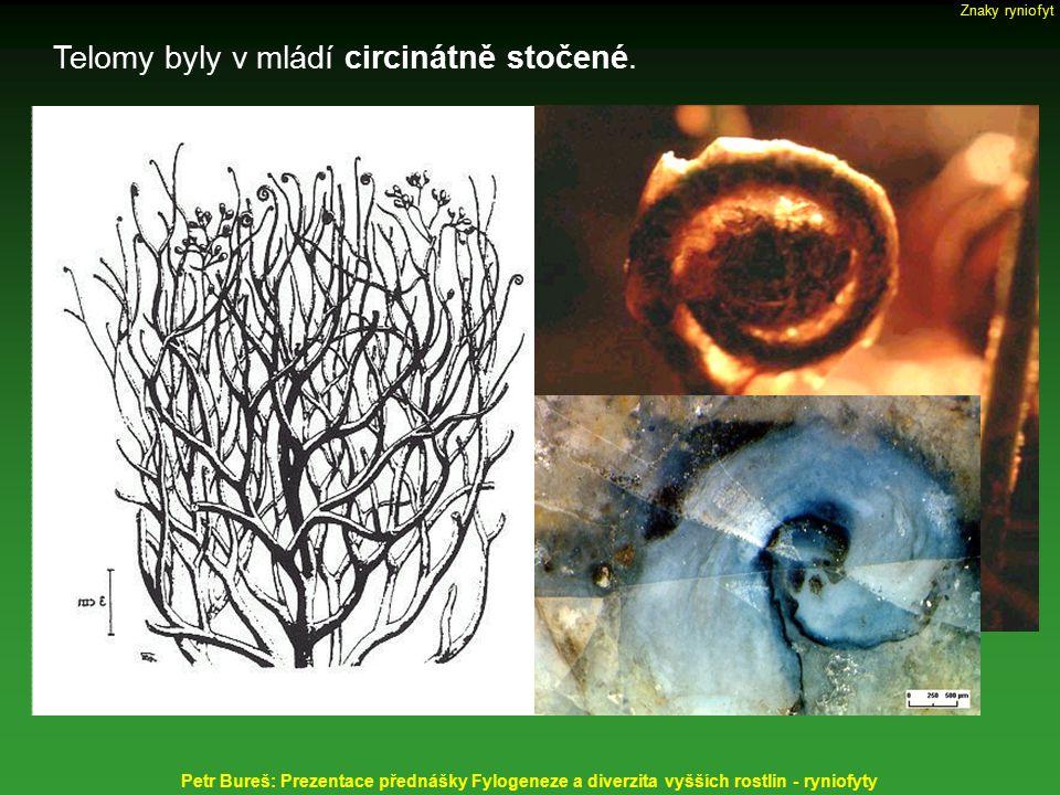 Telomy byly v mládí circinátně stočené. Petr Bureš: Prezentace přednášky Fylogeneze a diverzita vyšších rostlin - ryniofyty Znaky ryniofyt