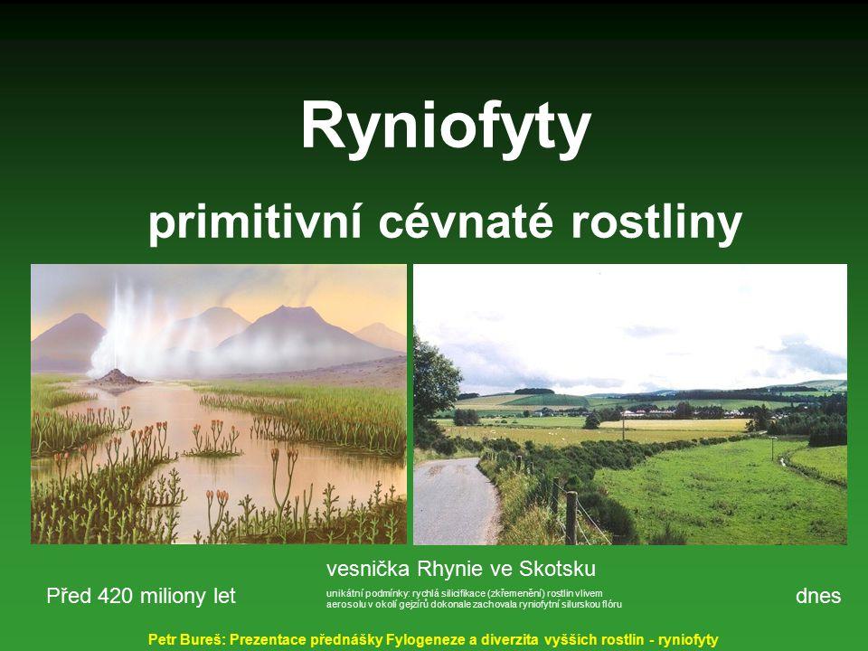 Ryniofyty primitivní cévnaté rostliny vesnička Rhynie ve Skotsku unikátní podmínky: rychlá silicifikace (zkřemenění) rostlin vlivem aerosolu v okolí g