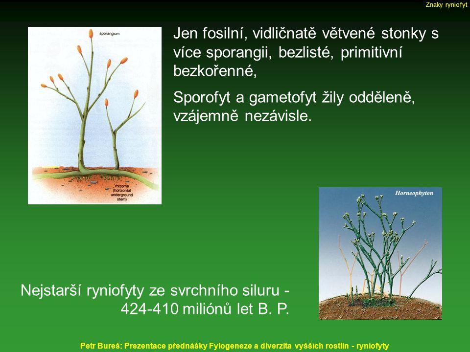 Jen fosilní, vidličnatě větvené stonky s více sporangii, bezlisté, primitivní bezkořenné, Sporofyt a gametofyt žily odděleně, vzájemně nezávisle. Nejs