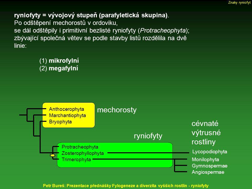 Sporangia eusporangiátní = tlustostěnná = stěnu tvoří více vrstev buněk izosporická, někdy uvnitř se sloupkem (columella) Horneophyton lignieri, c = columella Petr Bureš: Prezentace přednášky Fylogeneze a diverzita vyšších rostlin - ryniofyty Nothia aphylla Aglaophyton major Cooksonia pertoni Znaky ryniofyt