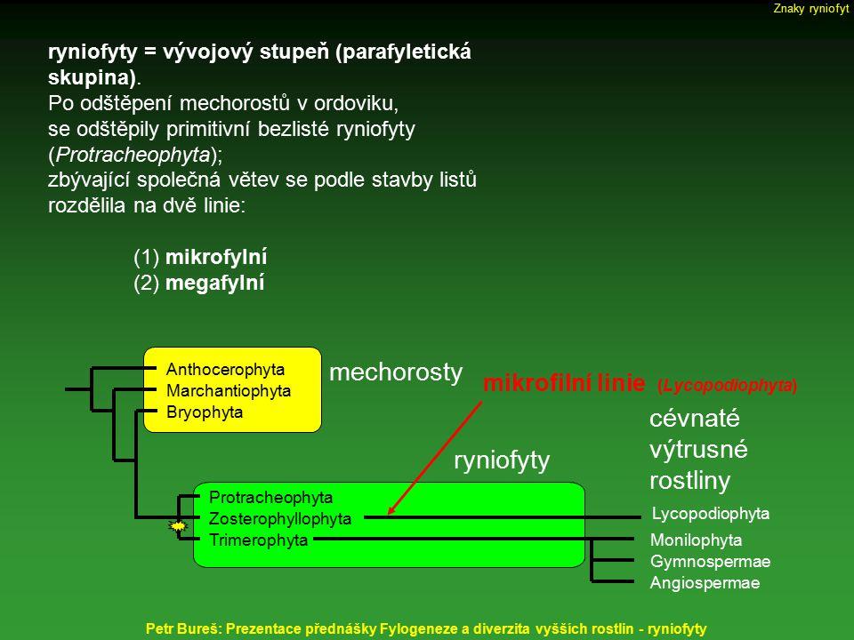 Gametofyt ryniofytů – zelený, volně (nezávisle na sporofytu) žijící, frondózní s terčovitými receptákuly (gametantiofory) připomíná gametofyt porostnice mnohotvárné (Marchantia polymorpha) receptakula a celé gametofyty častěji jednopohlavné jen s archegoniofory nebo antheridiofory méně často receptákula oboupohlavná vodivé elementy tvořené hydroidami Remyophyton delicatum - má oboupohlavná receptakula nesoucí archegonia i antheridia Znaky ryniofyt