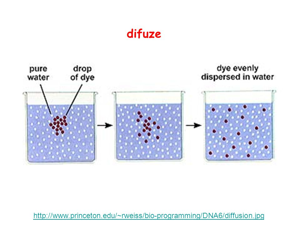 difuze http://www.princeton.edu/~rweiss/bio-programming/DNA6/diffusion.jpg