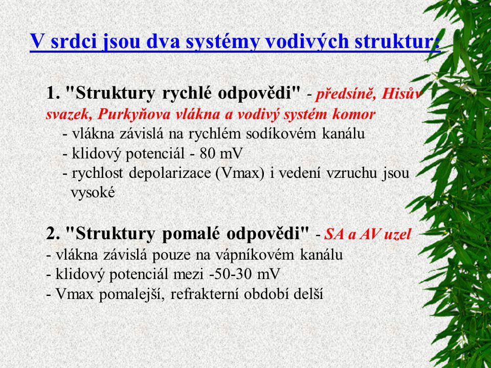 V srdci jsou dva systémy vodivých struktur: 1.