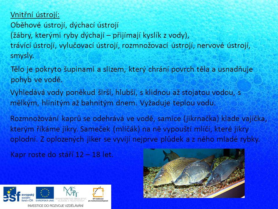 Vnitřní ústrojí: Oběhové ústrojí, dýchací ústrojí (žábry, kterými ryby dýchají – přijímají kyslík z vody), trávící ústrojí, vylučovací ústrojí, rozmno