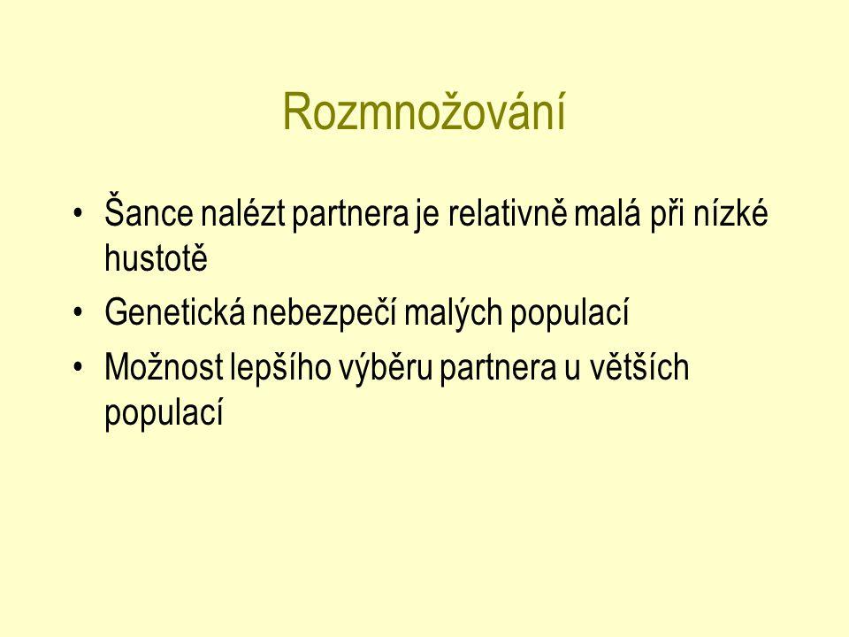 Rozmnožování Šance nalézt partnera je relativně malá při nízké hustotě Genetická nebezpečí malých populací Možnost lepšího výběru partnera u větších populací