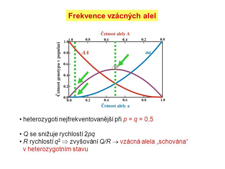 """heterozygoti nejfrekventovanější při p = q = 0,5 Q se snižuje rychlostí 2pq R rychlostí q 2  zvyšování Q/R  vzácná alela """"schována"""" v heterozygotním"""