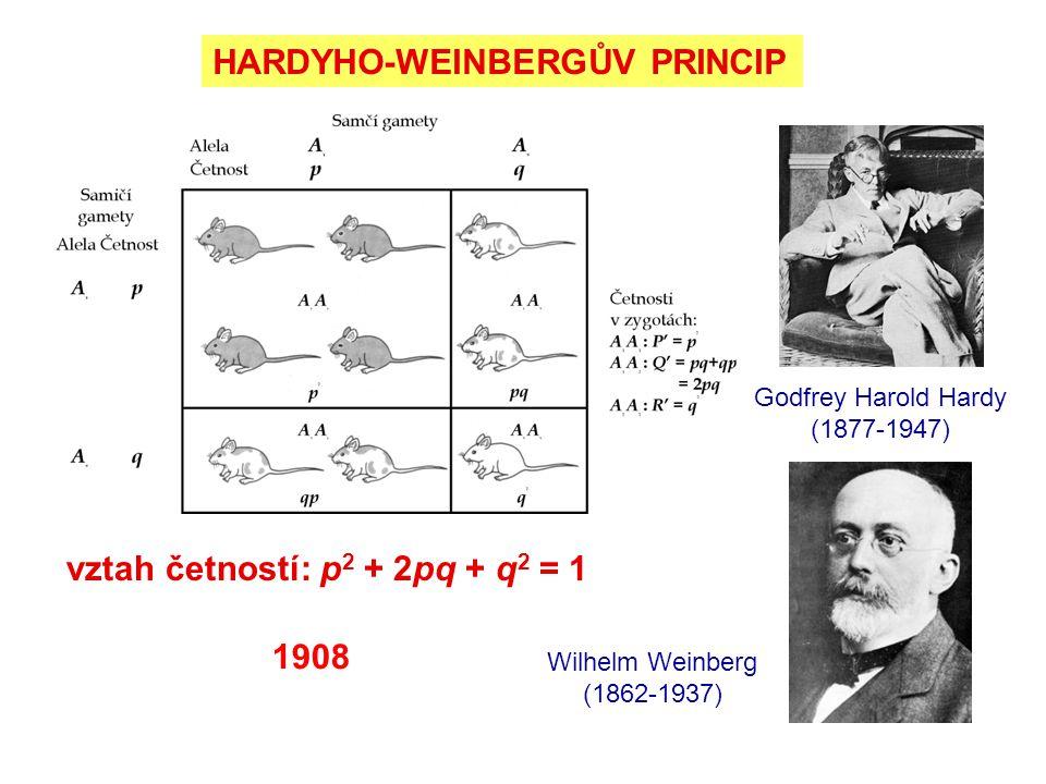 HARDYHO-WEINBERGŮV PRINCIP Godfrey Harold Hardy (1877-1947) vztah četností: p 2 + 2pq + q 2 = 1 Wilhelm Weinberg (1862-1937) 1908
