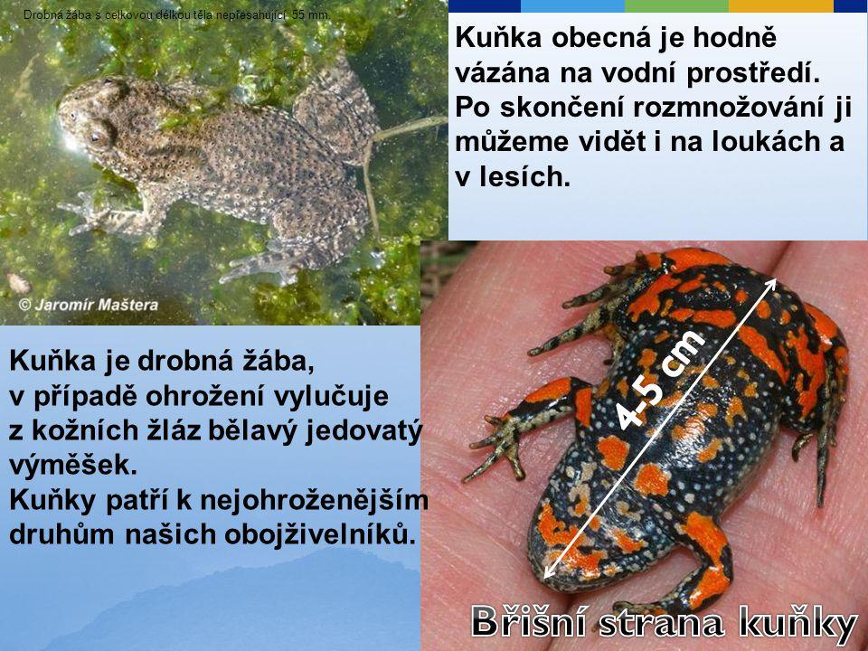 Kuňka je drobná žába, v případě ohrožení vylučuje z kožních žláz bělavý jedovatý výměšek. Kuňky patří k nejohroženějším druhům našich obojživelníků. D