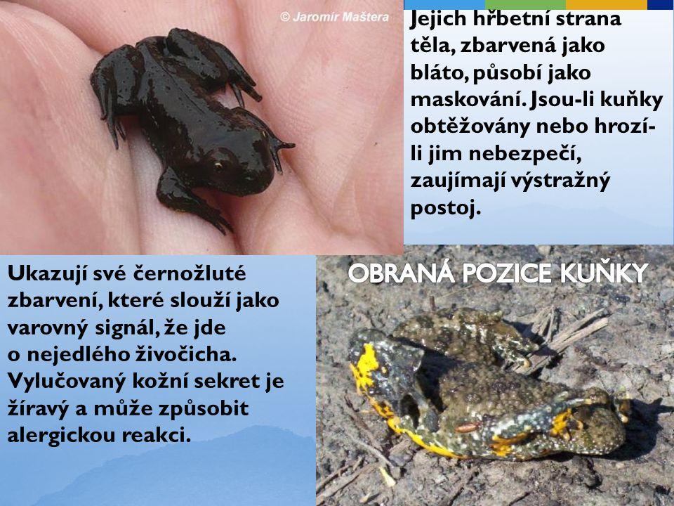 Ukazují své černožluté zbarvení, které slouží jako varovný signál, že jde o nejedlého živočicha. Vylučovaný kožní sekret je žíravý a může způsobit ale