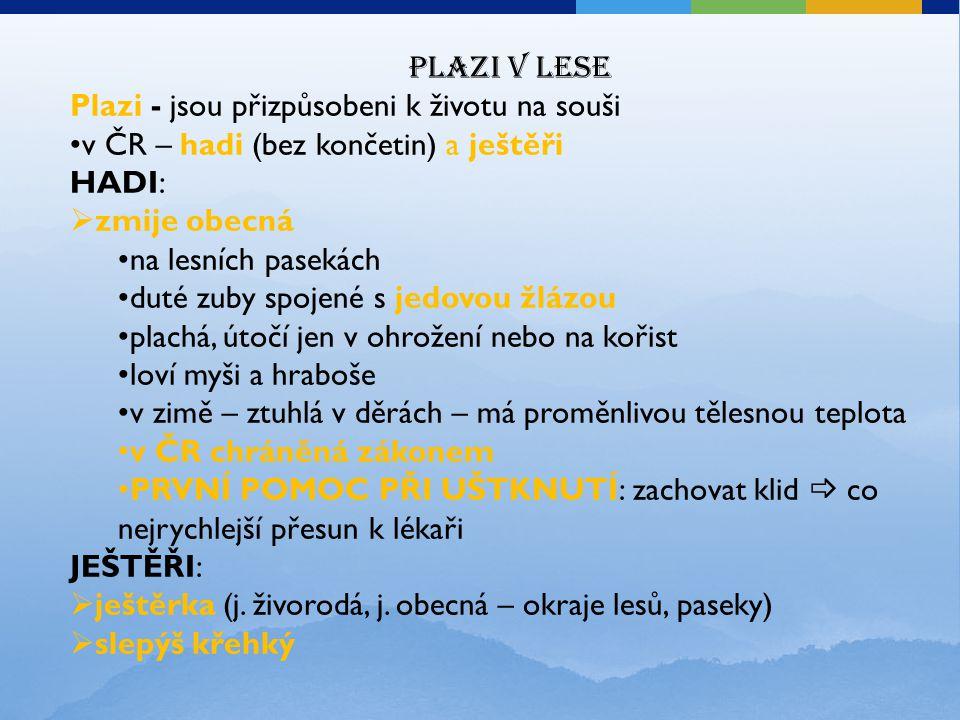 Plazi v lese Plazi - jsou přizpůsobeni k životu na souši v ČR – hadi (bez končetin) a ještěři HADI:  zmije obecná na lesních pasekách duté zuby spoje