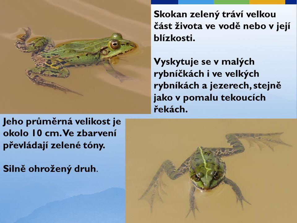 Skokan zelený tráví velkou část života ve vodě nebo v její blízkosti. Vyskytuje se v malých rybníčkách i ve velkých rybníkách a jezerech, stejně jako