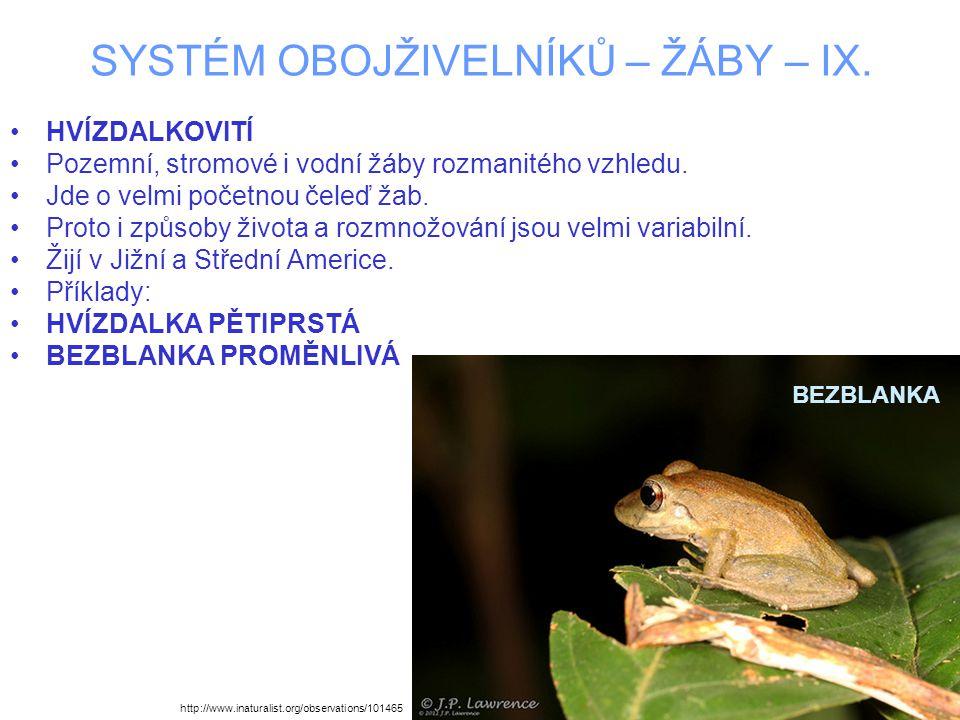 SYSTÉM OBOJŽIVELNÍKŮ – ŽÁBY – IX. HVÍZDALKOVITÍ Pozemní, stromové i vodní žáby rozmanitého vzhledu.
