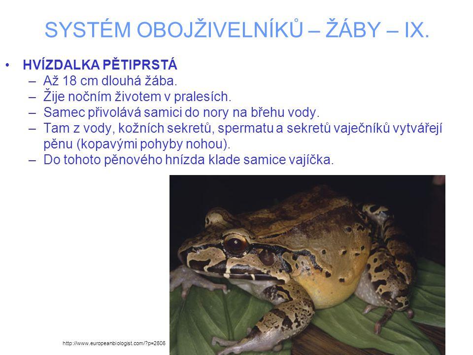 SYSTÉM OBOJŽIVELNÍKŮ – ŽÁBY – IX. HVÍZDALKA PĚTIPRSTÁ –Až 18 cm dlouhá žába.