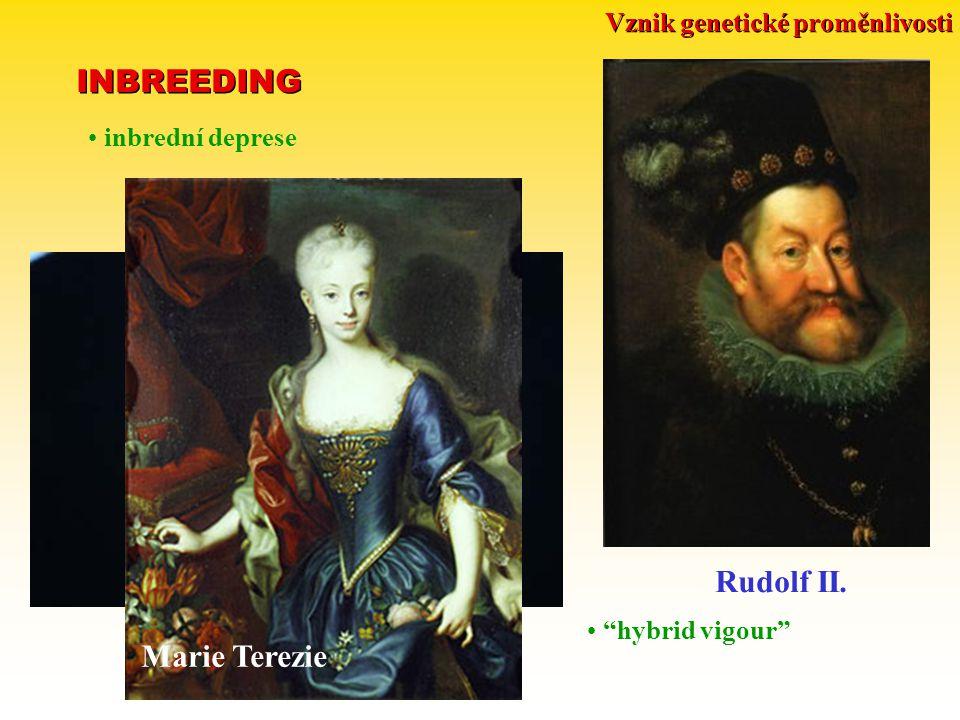 "Leavenworthia alabamica Vznik genetické proměnlivosti INBREEDING inbrední deprese ""hybrid vigour"" Rudolf II. Marie Terezie"