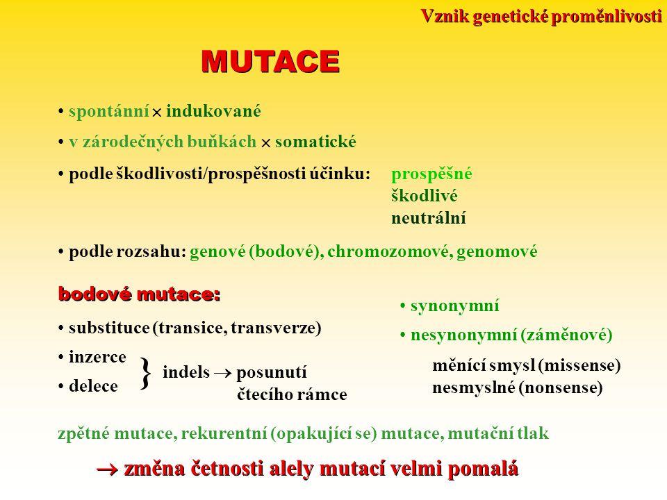 Vznik genetické proměnlivosti MUTACE spontánní  indukované v zárodečných buňkách  somatické podle škodlivosti/prospěšnosti účinku:prospěšné škodlivé