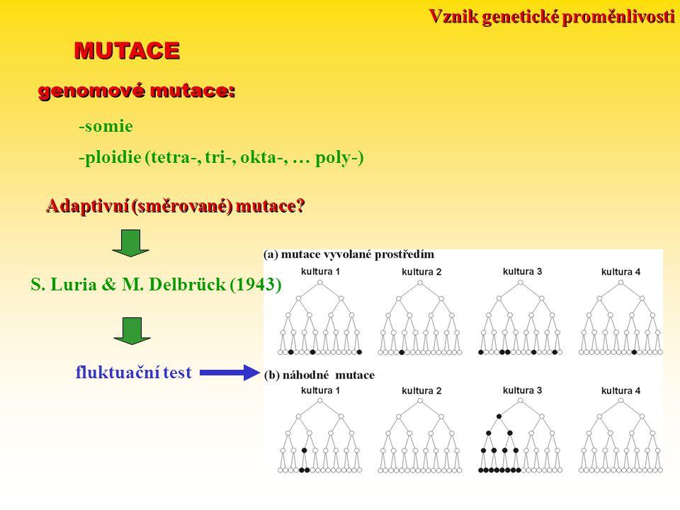 Vznik genetické proměnlivosti MUTACE genomové mutace: -somie -ploidie (tetra-, tri-, okta-, … poly-) Adaptivní (směrované) mutace? S. Luria & M. Delbr