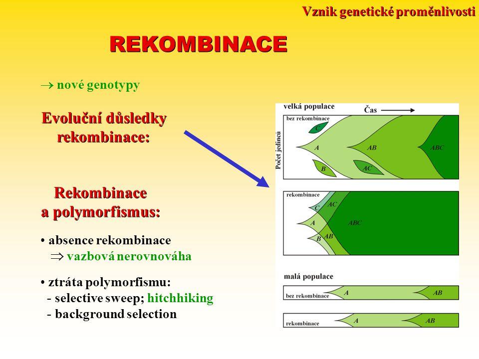 Vznik genetické proměnlivosti REKOMBINACE  nové genotypy Evoluční důsledky rekombinace: Evoluční důsledky rekombinace: Rekombinace a polymorfismus: Rekombinace a polymorfismus: absence rekombinace  vazbová nerovnováha ztráta polymorfismu: - selective sweep; hitchhiking - background selection