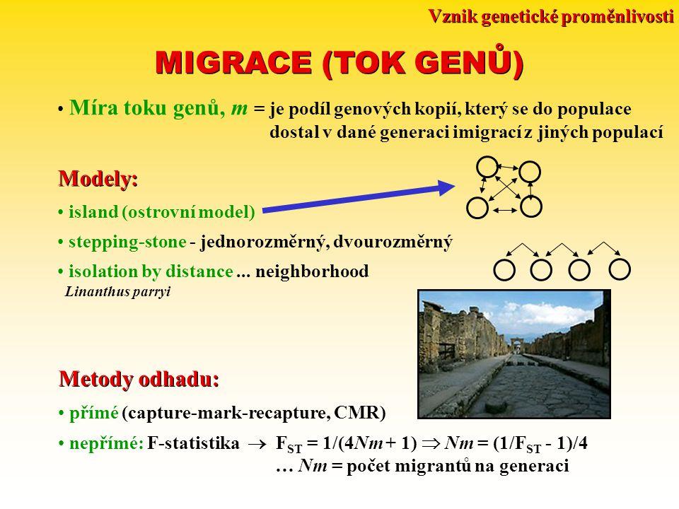 Vznik genetické proměnlivosti MIGRACE (TOK GENŮ) Míra toku genů, m = je podíl genových kopií, který se do populace dostal v dané generaci imigrací z jiných populací Modely: island (ostrovní model) stepping-stone - jednorozměrný, dvourozměrný isolation by distance...