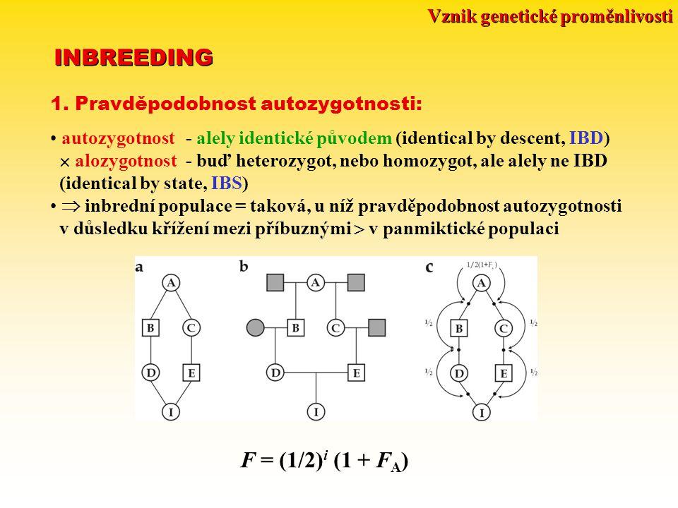 Vznik genetické proměnlivosti INBREEDING 1. Pravděpodobnost autozygotnosti: autozygotnost - alely identické původem (identical by descent, IBD)  aloz