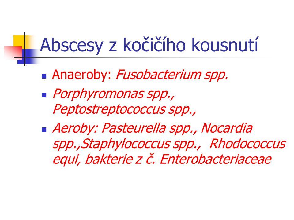 Abscesy z kočičího kousnutí Anaeroby: Fusobacterium spp.