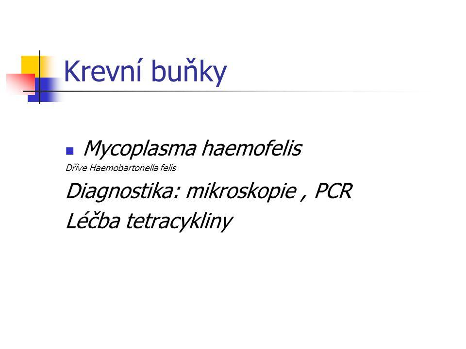 Krevní buňky Mycoplasma haemofelis Dříve Haemobartonella felis Diagnostika: mikroskopie, PCR Léčba tetracykliny