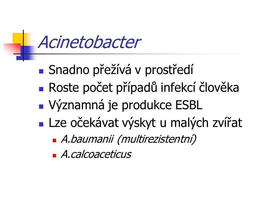 Acinetobacter Snadno přežívá v prostředí Roste počet případů infekcí člověka Významná je produkce ESBL Lze očekávat výskyt u malých zvířat A.baumanii (multirezistentní) A.calcoaceticus