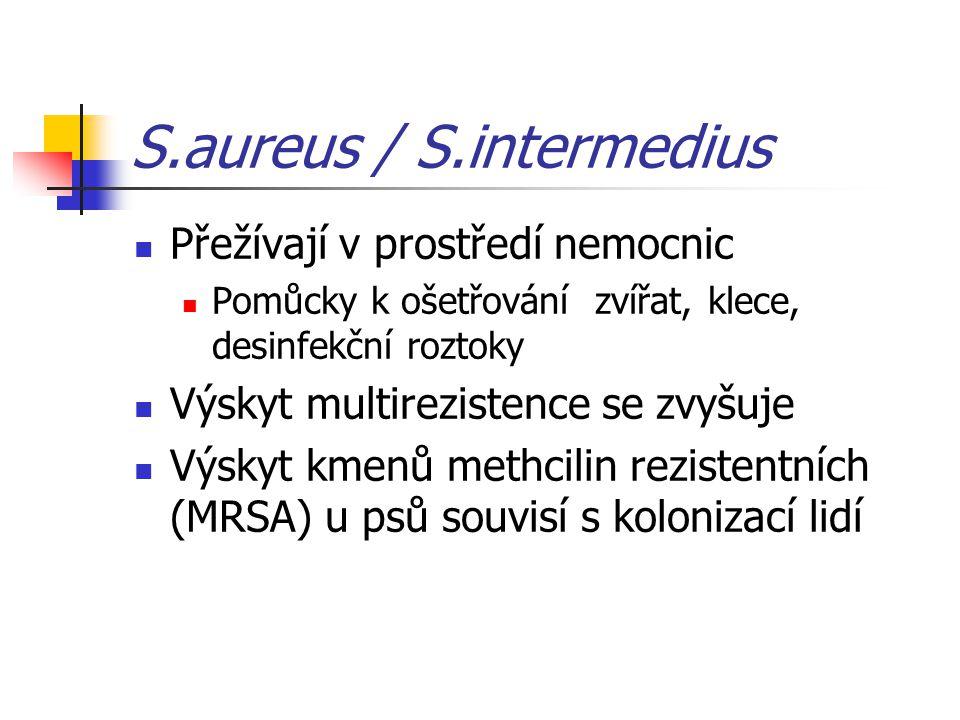 S.aureus / S.intermedius Přežívají v prostředí nemocnic Pomůcky k ošetřování zvířat, klece, desinfekční roztoky Výskyt multirezistence se zvyšuje Výskyt kmenů methcilin rezistentních (MRSA) u psů souvisí s kolonizací lidí