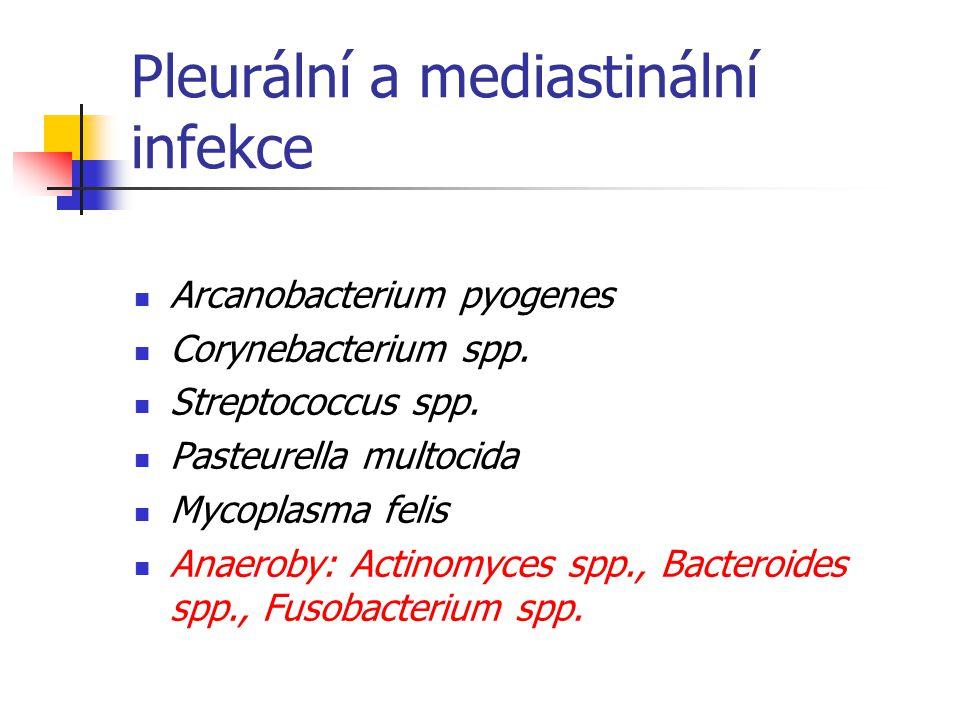Pleurální a mediastinální infekce Arcanobacterium pyogenes Corynebacterium spp.