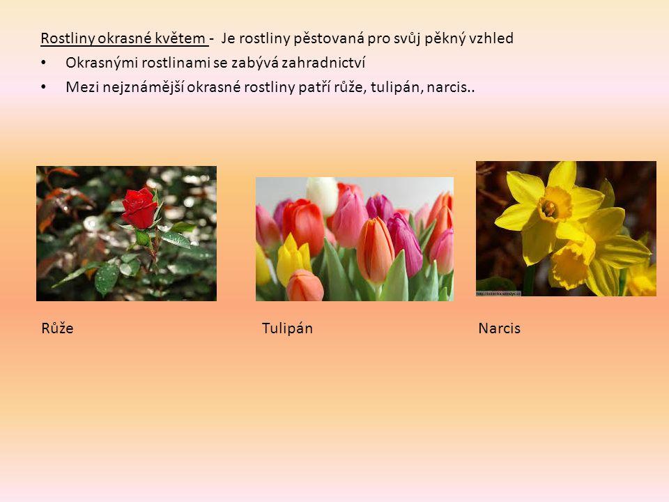 Rostliny okrasné květem - Je rostliny pěstovaná pro svůj pěkný vzhled Okrasnými rostlinami se zabývá zahradnictví Mezi nejznámější okrasné rostliny patří růže, tulipán, narcis..