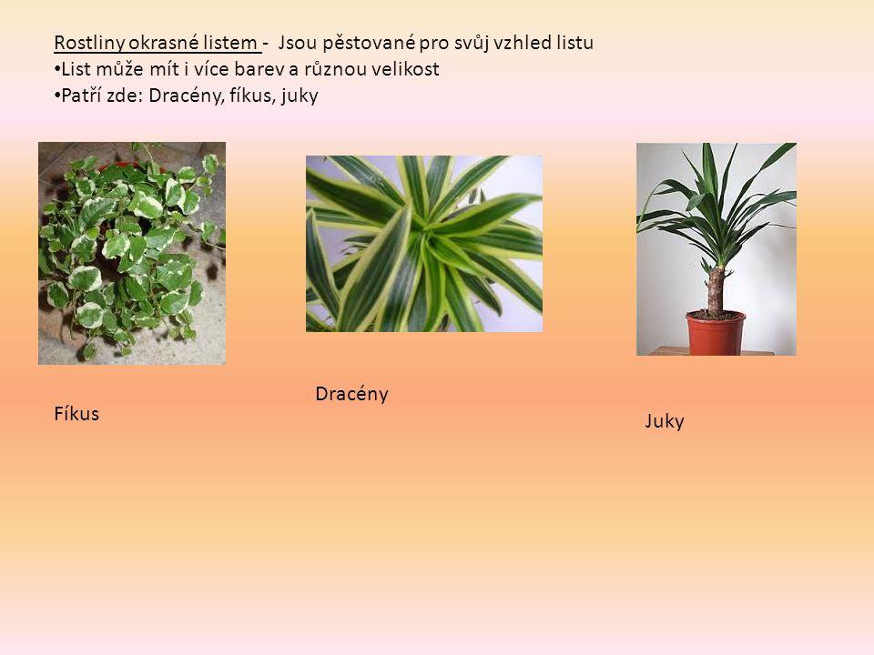 Rostliny okrasné listem - Jsou pěstované pro svůj vzhled listu List může mít i více barev a různou velikost Patří zde: Dracény, fíkus, juky Fíkus Dracény Juky