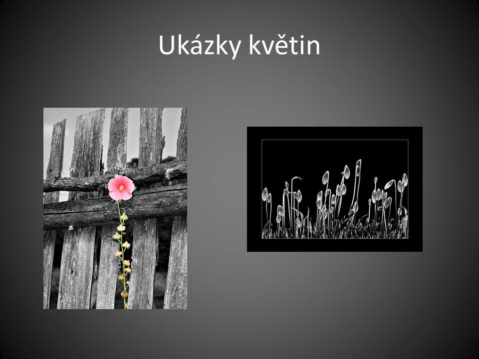 Ukázky květin